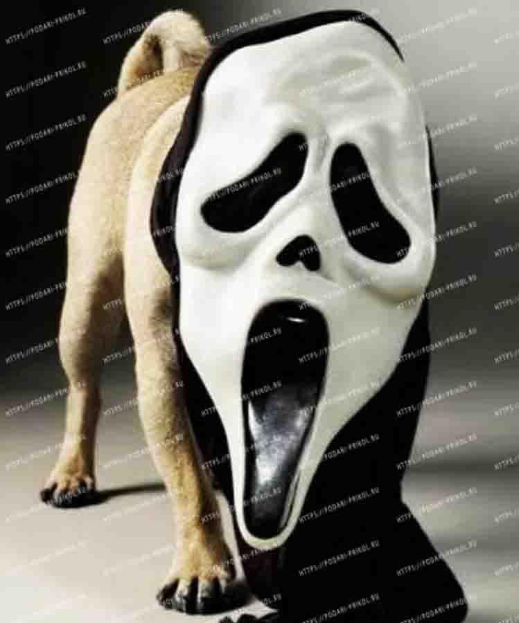 собака крик