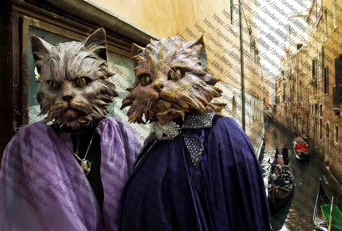 котики в масках и канал